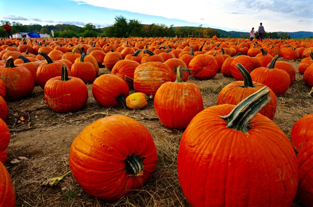 Weekend Escape from NYC – Top 10 Pumpkin Patches Near New York City