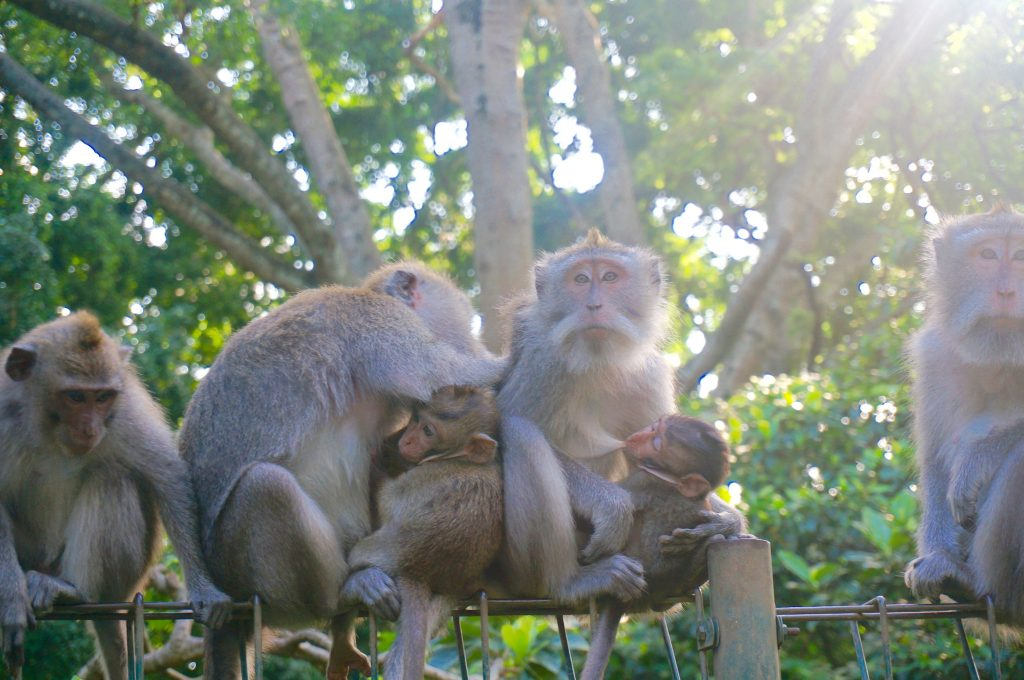 Ubud, Bali, Indonesia – Inside The Sacred Monkey Forest Sanctuary
